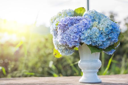 Hydrangea Flowers In White Vase Top On Old Wooden Table And Sunlight