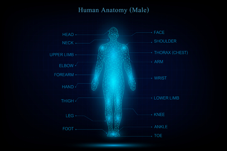 Anatomía del cuerpo humano que brilla intensamente azul en el fondo oscuro como concepto médico, científico y tecnológico. ilustración vectorial