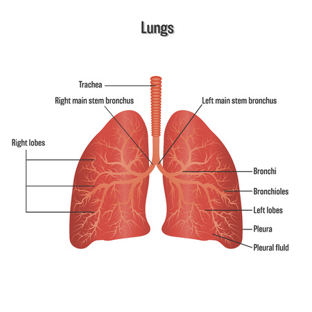 Lungs symbol. Breathing exercise. Respiratory system isolated on white background as Health care and science concept. vector illustration.