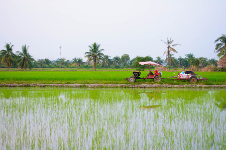 Farmer life on tractor at rice field photo