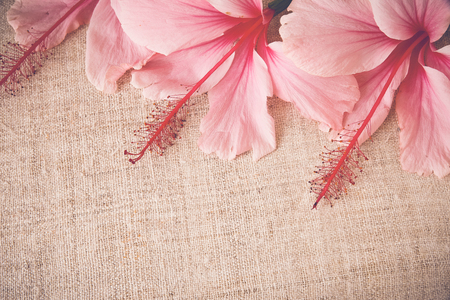 Flores de color rosa del hibisco en la ropa, copia espacio de fondo, el enfoque selectivo, el tono de la vendimia Foto de archivo - 50690472