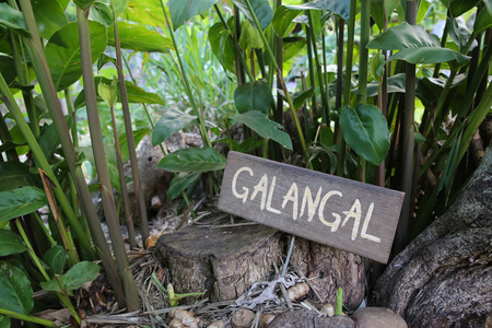 rustic: Rustic Herb markers, Galangal Stock Photo