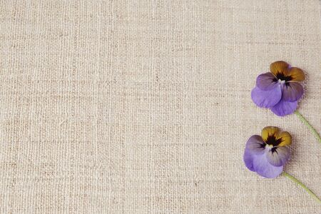 purple pansy flowers on linen, copy space background, selective focus, vintage tone