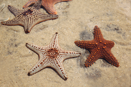 limp: Starfish in a rockpool, selective focus, color filter Stock Photo
