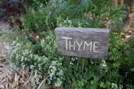 rustic: Rustic Herb markers, Thyme Stock Photo