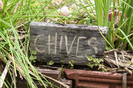 cebolleta: marcadores de hierbas rústicas, cebolletas Foto de archivo