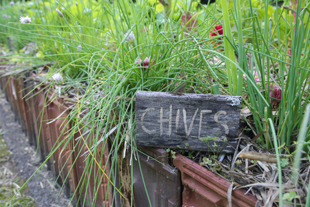 markers: Rustic Herb markers , Chives