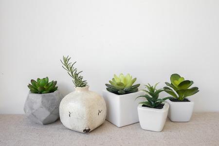 Varietà di succulente in vasi, decorazione della casa Archivio Fotografico