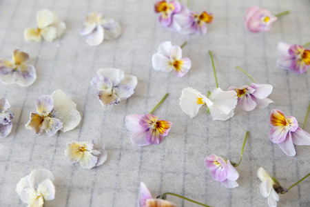 crystallized: Crystallized and fresh edible flowers on parchment paper
