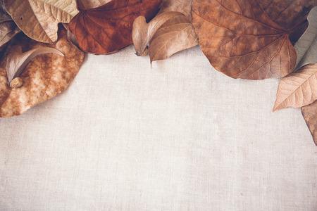 Őszi levelek másolás tér alakformálás háttér