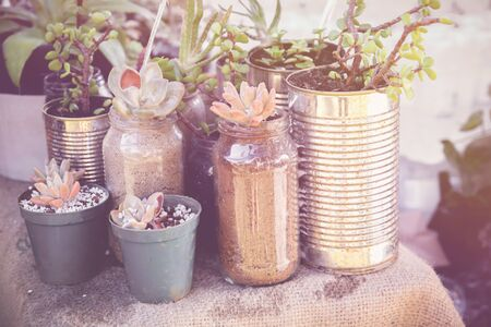 tins: succulents in rustic tins, Eco and reuse concept Stock Photo