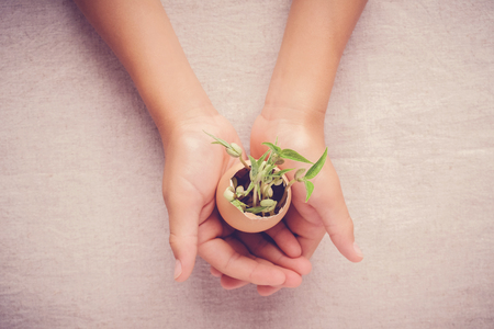 hands holding seedling plants in eggshells, eco gardening,  montessori, education, reuse, CSR concept Stock fotó