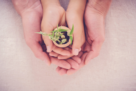 adult and child hands holding seedling plants in eggshells, eco gardening,  montessori, education, reuse, CSR concept Stock fotó