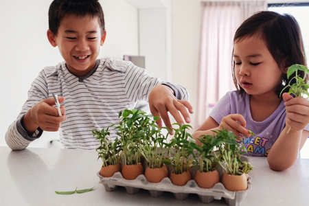 Mixed Asian children with seedling in eggshells,, eco gardening,  montessori, education , reuse concept