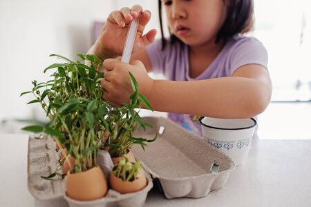 Mixed Asian girl watering plants in eggshells,, eco gardening,  montessori, education , reuse concept