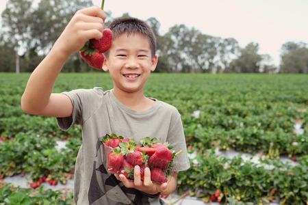 young Asian boy holding a box of fresh strawberries on organic strawberry farm Stock fotó