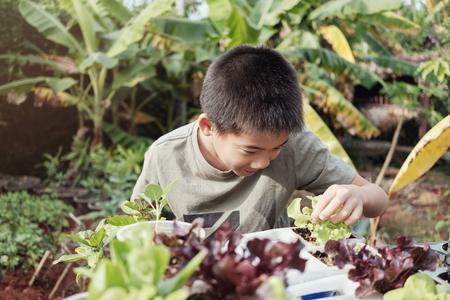 Jonge tween Aziatische jongen het plukken sla in hergebruik oude plastic containers, eco, hergebruik, montessori onderwijs, homeschool concept