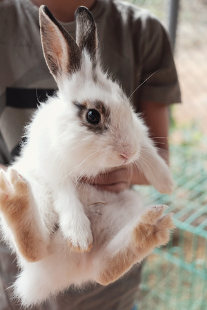young boy holding bunny rabbit