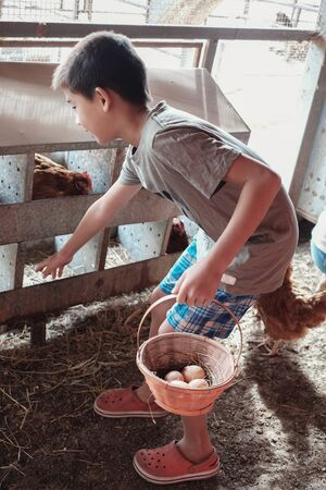 young boy collecting eggs, homeschool education concept, Easter activity for kids Stock fotó