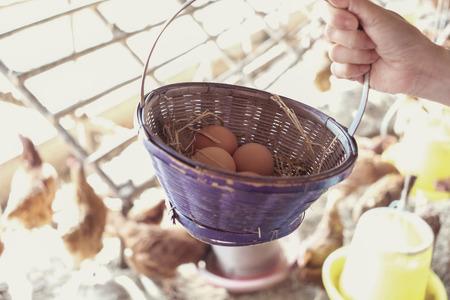 hand holding basket of fresh organic chicken eggs, Easter activity for kids