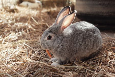 Cute Easter bunny eating carrot