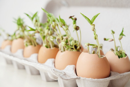 seedling plants in eggshells, eco gardening,  montessori, education concept, reuse Stock fotó