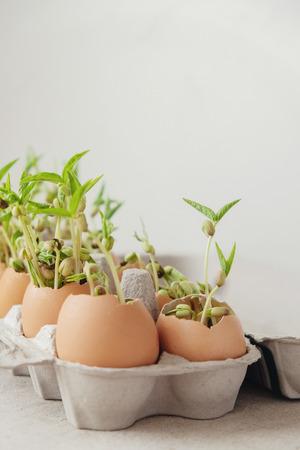 seedling plants in eggshells, eco gardening,  montessori, education concept, reuse Banco de Imagens