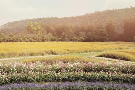 beautiful mixed flowers field Banco de Imagens