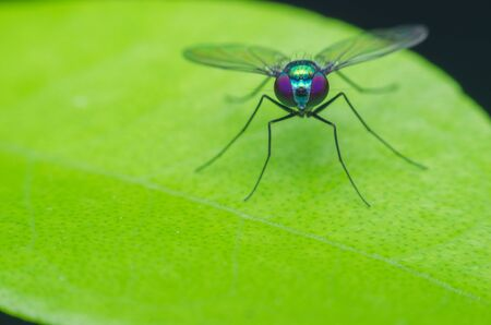 Long legged fly on leaf.
