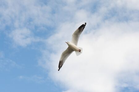 white seagull flying in sky.