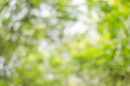 abstract blur green nature bokeh background from tree leaves.