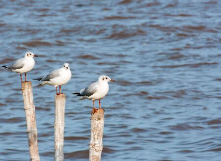 Seagulls with sea background