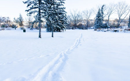 Walking trail in the Prince s Park, Calgary, Alberta, Canada