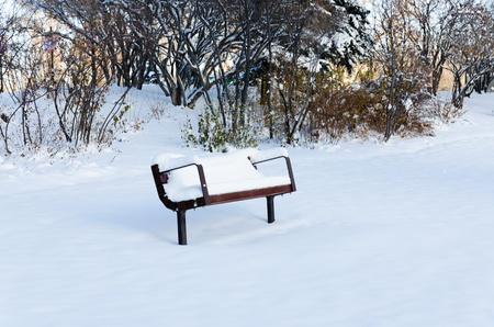Bench in the park in winter time photo