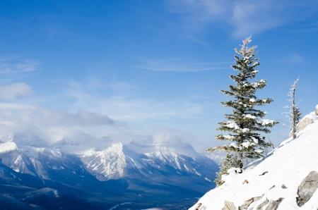 Pile tree on the Summit sulphur mountain