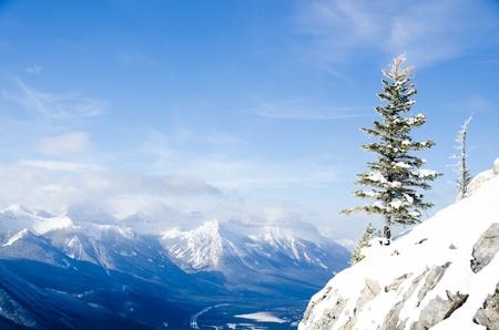 Pile tree on the Summit sulphur mountain Stock Photo - 16720800