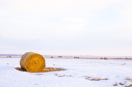 Hay bale or sheaf in a cold day in winter at morning time  Stock Photo