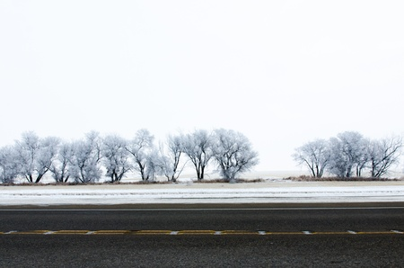 Trees in the winter season Stock Photo - 16720741