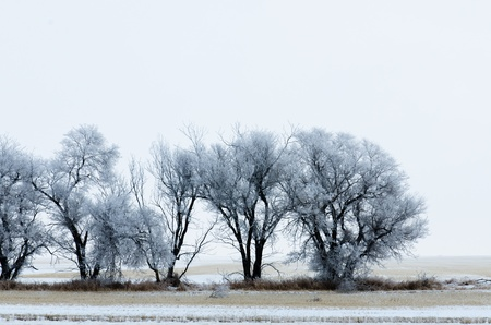 Trees in the winter season Stock Photo