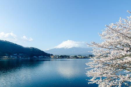 Fuji-san with Cherry Blossoms in April 2015 at Kawaguchiko lake, Japan Stock Photo
