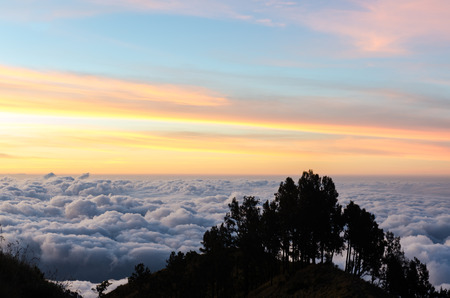 Silhouettes of trees at sunset with sky and clound background, rinjani, indonesia