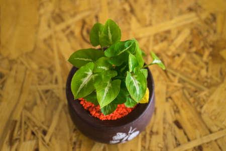 flowerpot: small pants in flowerpot