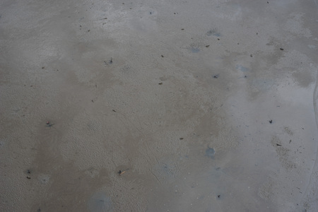 blenny: ebb tide at andaman ,sea nature striped on mud beside the sea
