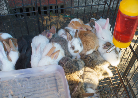 lunar month: baby rabbit in urban fair of Thailand such as Loy Kra Thong fair occurred ten days in  twelfth lunar month, new year festival , anniversary established Stock Photo