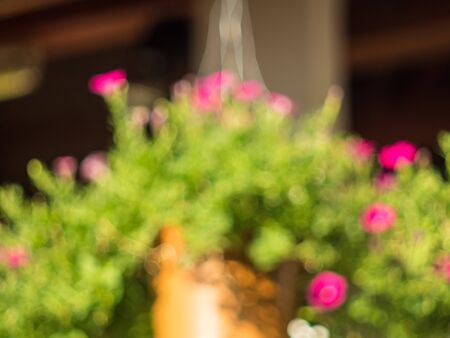 flower in pot: blur view flower pot hang on roof, blur background Stock Photo