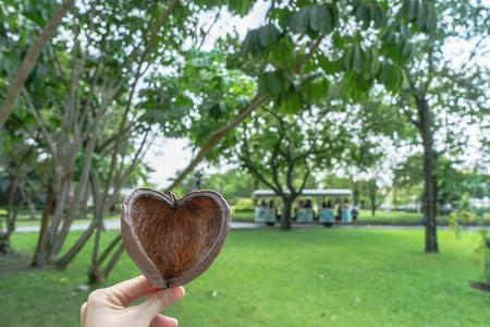 hard love: fruit shell look like heart on garden background Stock Photo