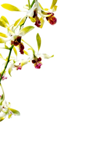 Orchid Thailand Stock Photo