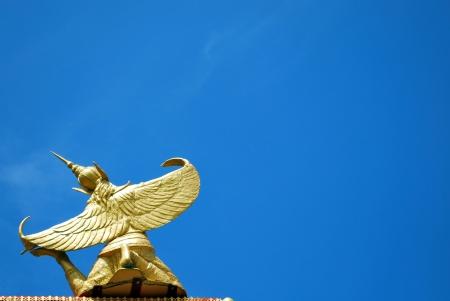 alf: Alf bird soar into the air in Thailand