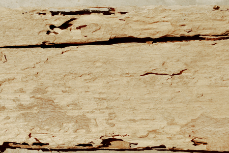 Weathered wood grain background. 版權商用圖片