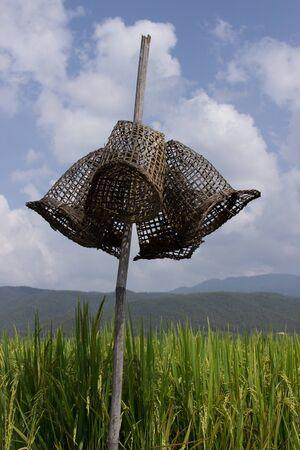 cashing: Fish cashing change on the bamboo.